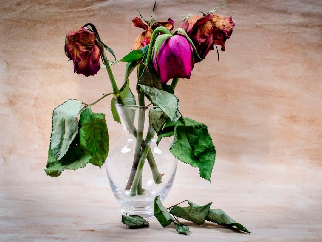 Розы. Что означает цветок. Виктория Браткова